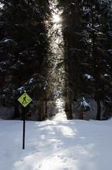 follow the road... (Ewa Sokol) Tags: wood las schnee light snow ski licht lumiere neige savoie fort