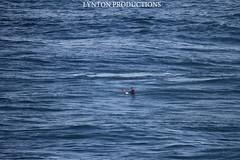 IMG_4344 copy (Aaron Lynton) Tags: hawaii big surf wave maui surfing jaws xxl tow peahi towin wsl lyntonproductions