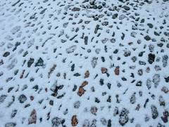 snow_in_our_garden_7882-1 (allybeag) Tags: trees winter snow weather sunrise garden veg cobbles bushes criffel slouds