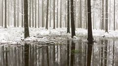 Snow In The Woods (iegienie) Tags: wood snow film forrest sneeuw bos filmisch