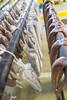 Deer Sausage Weekend (taylorsloan) Tags: smoke mo process hardwork behindthescenes making phew hermann casing bts handpress deersausage dryrack