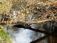 Duisburg - Wambach I (Jo Dudek) Tags: wasser outdoor laub natur pflanze duisburg wald blätter bäume wambach