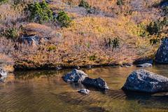 Tarn Shelf_5 (mckenart) Tags: autumn mountains landscape flora australia alpine tasmania wilderness fagus tarnshelf nothofagusgunii deciduousbeech