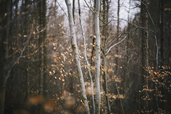 Dreamy (desomnis) Tags: wood nature leaves forest woodland woods dof natural bokeh natur viennawoods canon6d canon135mmf20 desomnis