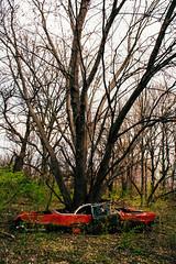 Planter (Off The Beaten Path Photography) Tags: tree abandoned nature car grow automotive forgotten lincoln abandonment naturevsman abandonedindiana abandonedamerica