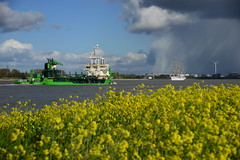 Pallieter (larry_antwerp) Tags: port ship belgium belgi vessel antwerp schelde darmodziey  antwerpen  dredger schip   darmlodziezy pallieter                          7821075 9279123