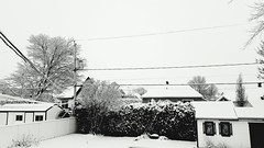 Snowy Snowy Morning Snowy Landscape Snowy Scene Snowy Day  Snowy View! Cold Cold Days Cold Winter  Check This Out (alexthibeault) Tags: cold snowy snowylandscape snowymorning snowyview checkthisout snowyscene colddays coldwinter snowyday