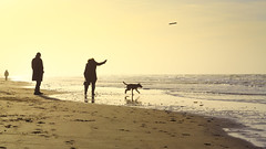 Fetch (Michael Angelo 77) Tags: dog beach netherlands silhouettes wijkaanzee