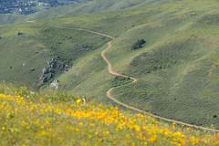 GGNRA 04-16-16 082 E (j f beach) Tags: hiking marinheadlands springtime goldengatenationalrecreationarea