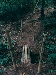 Forest (luanafrnc) Tags: forest jungle brigde amaznia