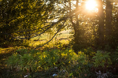 In the woods (Marua erjal) Tags: sunset sun green nature forest woods warm asiago