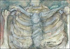 In process. The coracoid. 17 April, 2016. (Sharon Frost) Tags: paintings drawings anatomy ribs bones ribcage spine skeletons sketchbooks journals breastbone sharonfrost daybooks manubrium