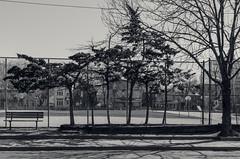 Group of Six (JeffStewartPhotos) Tags: school trees blackandwhite bw toronto ontario canada blackwhite scout photowalk toned parkdale lansdowne schoolyard lansdowneavenue prewalk torontophotowalk topw torontophotowalks walkingwithvickii checkingtheroute topwpkdl