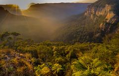 blackheathsunrise (robinmoon) Tags: camera autumn trees light mist nature fog sunrise gold flickr blackheath