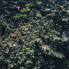 Green (Olly Denton) Tags: uk plants 6 green london apple nature leaves wall architecture work leaf mac photojournalism boroughmarket greenery borough ios journalism southwark iphone fakenature vsco iphone6 vscocam