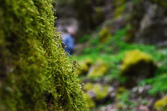 mysterious man. (CemDur) Tags: light plants sun sunlight plant man tree green nature forest germany outside bavaria photo moss nikon rocks forrest outdoor path natur trail mysterious