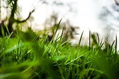 POV (skribblechris) Tags: park blur macro green grass spring pointofview blades
