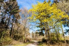 Tiddesley Wood - walking country (Macro light) Tags: flowers trees spring woods woodlands walks wildlife conservation naturereserve trust worcestershire oaks wildflower pershore springcolour tiddesleywood