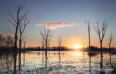 Arcot Lake ( Ian Flanagan) Tags: trees light sun lake colour sunrise canon photography swamp 5d sunburst canon5d ef24105mmf4l arcot leefilters