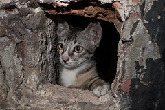 My home is my castle (N808PV) Tags: castle home cat kitten lx7