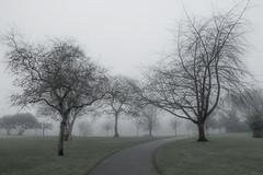 20151227_The_Park (Damien Walmsley) Tags: park trees mist colour branches desaturation knowle