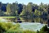MILL LAKE SEASONS:  MILL LAKE AND HER BEAUTIFUL REFLECTIONS...ABBOTSFORD,  BC. (vermillion$baby) Tags: milllake abbotsford blue fraservalley green lake lilypads reflections spring tree bc seasons lakemilllakeseasonsabbotsford summer milllakeseasons wetlands