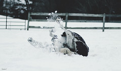 (suzcphotography) Tags: winter horse snow animal angel canon 50mm virginia mare january blizzard rolling equine t3i 2016