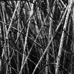 sorrows (Wo Mue Ov) Tags: light blackandwhite lines darkness sorrows