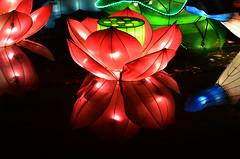 Lotus Lantern (pokoroto) Tags: autumn canada calgary october lotus alberta lantern 10 2015     kannazuki   themonthwhentherearenogods 27