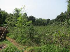 IMG_6976.jpg (Kuruman) Tags: sylhet bangladesh srimangal