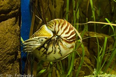 Nautilus (xanfer) Tags: sevilla huelva animais acuario nautilus huelva2016