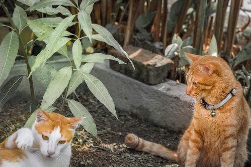 A Catty Conversation 😸