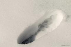Orma (mimmotamburro) Tags: snow canon neve impronta 70200f4 orma 70d