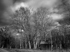Stormy day (CTfoto2013) Tags: road trees winter sunset sky blackandwhite bw plant storm tree blancoynegro monochrome field grass clouds forest woodland landscape lumix mood outdoor connecticut hiver champs newengland atmosphere stormy nb bn panasonic route dirt ciel arbres lumiere nuages paysage foret sentier chemin orage audubon afternoonlight sousbois herbes southbury apresmidi orageux gx7 bentoftheriver micro43 lumieredhiver mirrorlesscamera