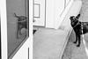 image (andreas.konir) Tags: l1 streetphotography digitalbw mofo l2 planetearth monart provoke blackorwhite mbmw backtoblack minimalbw colorescape monochromaward dreamsinbw showursnaps imagegallerybw qbwi groupwithexperience skanceli spclub streetcontent creativstreetphot mystreetfavorites monochromlevel1 absolutemonochrom bwsenca