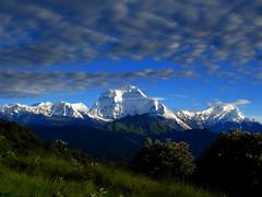 In the Annapurnas (Py All) Tags: nepal mountain snow nature montagne trekking trek outside asia outdoor ciel asie neige himalaya nuage paysage pokhara extrieur annapurna calme randonne poonhill ghorepani picdemontagne flancdemontagne