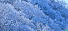 Frozen Trees with The Ray Of Light at Mt. Fugen, Unzen, Japan (s.take-zak) Tags: we together were these wish in i frozentreeswiththerayoflightatmtfugen japanyourefrozenwhenyourheartsnotopen
