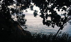 (_pixxxie) Tags: sea tree praia beach rio stone de arbol mar eva rj janeiro playa sugar corcovado e da pao aucar loaf arvore pedra gavea adao