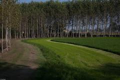 la strada verde (Clay Bass) Tags: trees light green 50mm natural path canon5d savigliano