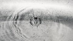 Liquid metal (mostaphaghaziri) Tags: water monochrome metal nikon natural metallic drop chrome shutter highspeed d7200