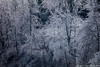 """Ice Forest • <a style=""""font-size:0.8em;"""" href=""""http://www.flickr.com/photos/65051383@N05/25434481924/"""" target=""""_blank"""">View on Flickr</a>"""