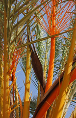 The colours of palm (Lark Ascending) Tags: orange colour tree green portugal nature leaf saturated shoot palm algarve silves datepalm