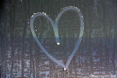 Koud he (LadyLove1967) Tags: bevroren denhaag hart januari ijspegel zwanen vrieskou