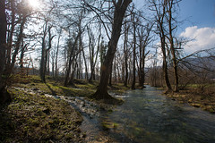 Spring at the forest (Iztok Alf Kurnik) Tags: travel trees wallpaper sun nature water beautiful grass forest river landscape spring stream postcard oldtrees naturelover travelguide travelphotography beautifulnature amazingnature traveltheworld naturebeauty beautifulplace naturewallpaper naturepostcard iztokkurnik