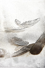 Flocking Feathers (GracefulFoto) Tags: wood old light shadow wild brown white abstract color detail bird texture nature animal angel strand pen vintage person grey zoo one fly swan soft pattern natural timber dove object grunge softness gray decoration smooth feather fluffy down retro fluff falling single dreams imagination fowl concept delicate fragile tool isolated quill tender lightly textured airy plume purity plumage effortless feathering