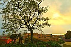 Paesaggio-Cagliari (Erica Congia) Tags: sardegna tramonto natura case albero colori riflessi cagliari paesaggio sud citt sfondo sudsardegna