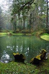-  (Steve only) Tags: leica trees lake landscape lumix dc hiking cellphone panasonic snaps asph f28     elmarit 102mm  10228 128102 dmccm1