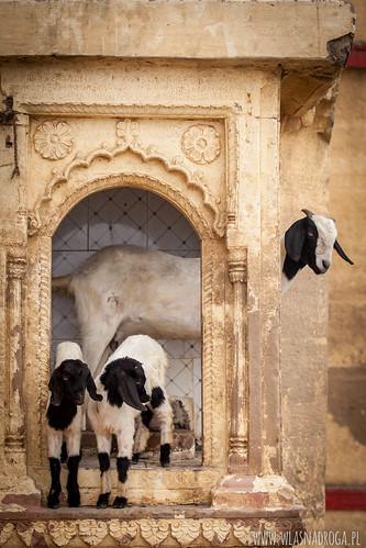 Każdy w Waranasi znajdzie dla siebie miejsce