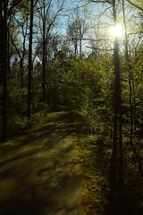 DSC_0967 (julian jones (arkansas)) Tags: travel trees plants sunlight green history nature leaves lines curves perspective shapes ground places trail arkansas height aboretum photowalking