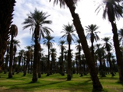 IMG_6787 (Jackie Germana) Tags: california usa deathvalley furnacecreek badwaterplace